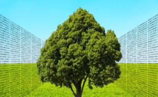 Die »Digitale Dorflinde« steht synonym für kostenlose Internet-Treffpunkte an öffentlichen Plätzen. Montage: Schmidtkunz / Fotos: Gellinger, Johnson   Pixabay