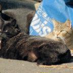 In Gudensberg sucht die Katzenhilfe derzeit eine neue Bleibe. Foto: nh