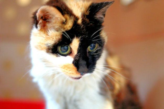 Für Linnea sucht das Tierheim Beuern ein letztes Zuhause. Foto: nh