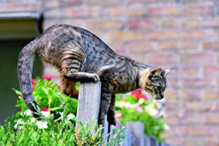 Bevor die Katzen ihren Freiheitsdrang ausleben, sollten sie gechippt werden. Der Transponder kann Fundkatzen nach Hause bringen. Foto: Mabel Amber | Pixabay