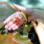 Das Wasser ist sicher und sauber, sagt die FWG im Landkreis. Privatisierungsideen lehnt sie ab. Foto: congerdesign | Pixabay