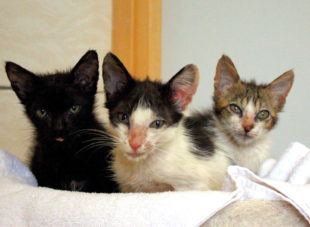 Das Katzentrio kann frühestens nach Ablauf der Quarantäne in die Vermittlung gegeben werden. Foto: Tierheim Beuern