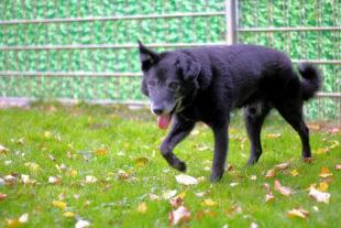 Lucky ist ein freundlicher alter Hund, der ein neues liebevolles Zuhause sucht. Foto: Tierheim Beuern