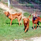 Bennet, Clay, Gibbs und Morris suchen jeder ein neues Zuhause. Foto: nh