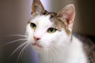 Daisy ist der akutelle Notfall im Tierheim und hofft auf Vermittlung in fürsorgliche Hände. Foto: nh