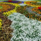In der Landesgartenschau dürfen die Kommunen wieder zeigen, was sie auf dem Kasten und in den Beeten haben. Bewerbungen werden ab sofort angenommen. Foto: nh