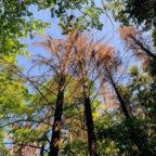 Der Zustand des Waldes ist so dramatisch, dass jede Art von öffentlicher Diskussion dringend notwendig ist. Foto: Helmut Mutschler
