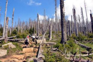 Klimawandel und Waldsterben bieten auch für den Aktivtourismus nur düstere Aussichten. Foto: Michael Strobel | Pixabay