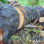 Aus Sicherheitsgründen muss während der Baumfällarbeiten die Straße voll gesperrt werden. Foto: Wolfgang Claussen | Pixabay