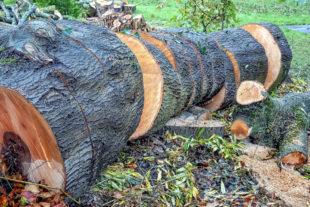 Aus Sicherheitsgründen muss während der Baumfällarbeiten die Straße voll gesperrt werden. Foto: Wolfgang Claussen   Pixabay