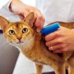 Eine Katze wird gechippt. Sollte sich das Tierchen mal verirren, kann ihm ein Besitzer mühelos wieder zugeordnet werden. Foto: nh