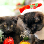Auch wenn sie noch so putzig aussehen, Tiere sollten nicht zu Weihnachten verschenkt werden, mahnt das Tierheim Beuern. Foto. Josh Clifford | Pixabay