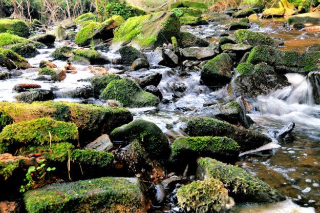 Kommunen, die im Wettbewerb leer ausgingen, können sich trotzdem für die Umwelt engagieren, denn gescheitert ist noch keine Renaturierung. Foto: nh | B90/Die Grünen