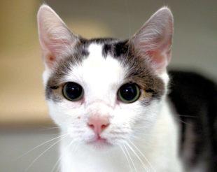 Pierre ist korrupt wie alle Katzen, hat aber ein freundliches Wesen. Foto: nh