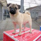 Das Pressefoto vom Start der Charity Aktion entstand im Tierheim Heppenheim. Nach Beuern ging erst kürzlich eine Futterspende. Foto: Michael Deichert | Petfood