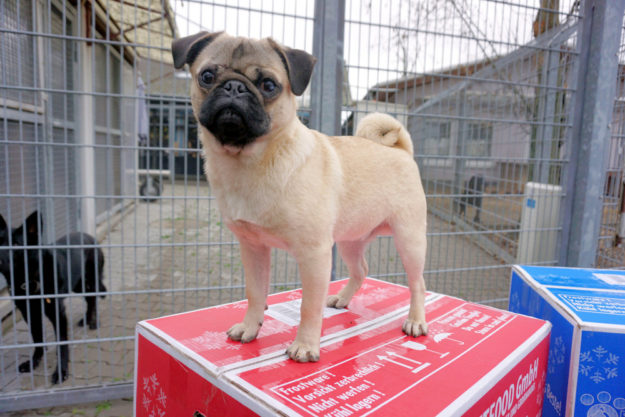Das Pressefoto vom Start der Charity Aktion entstand im Tierheim Heppenheim. Nach Beuern ging erst kürzlich eine Futterspende. Foto: Michael Deichert   K&K Petfood