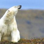 Peter Romanow zeigt eine beeindruckende Foto-Show über die Wrangel-Insel. Foto: Romanow | nh