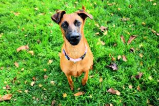 Jung, aufgedreht und neugierig. Leila braucht ein neues Zuhause, in dem sie von erfahrenen Hundehaltern erzogen wird. Foto: nh