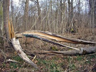 Die Stürme der vergangenen Tage haben in der Natur ihre Spuren hinterlassen. Foto: erge | Pixabay