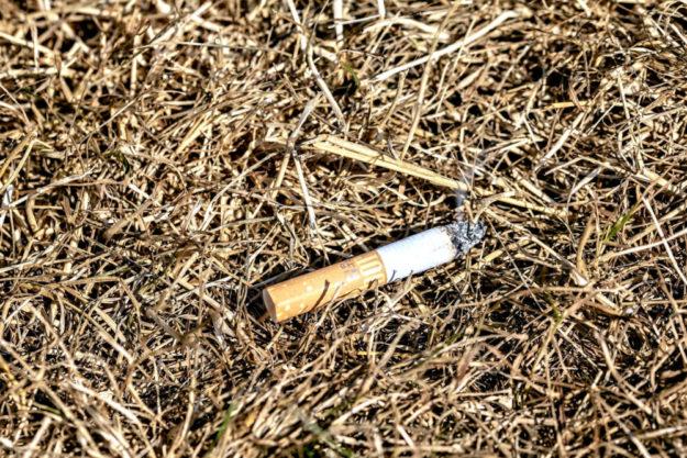 Im Unterholz herrscht Dürre, und insgesamt sind Wälder und Felder seit Monaten viel zu trocken.  Das Umweltministerium warnt vor einer erhöhten Waldbrandgefahr. Foto: Myriam Zilles | Pixabay