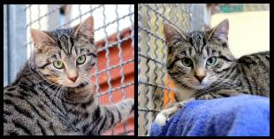 Zwei Mädel suchen ein neues Zuhause: Gaja und Gala. Fotos: nh