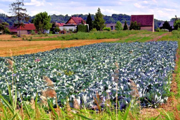 Heute auf dem Acker, morgen auf dem Teller. In der grünen Strategie Farm To Fork ist eine nachhaltige Landwirtschaft Programm. Foto: Henryk Niestrój | Pixabay