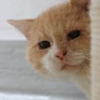 Leopold mag es eher exklusiv. Nach erster Vermittlung voriges Jahr zeigte er sich mit seinem Mitbewohner so unzufrieden, dass er erneut eine Bleibe sucht – vorzugsweise mit Freigang. Foto: nh