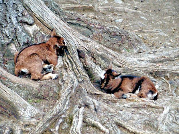 Die Tiere im Wildpark dürfen ab Donnerstag wieder besucht werden. Foto: nh
