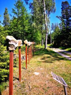 Der Ars Natura Wanderweg im  Melsunger Stadtwald. Foto: nh