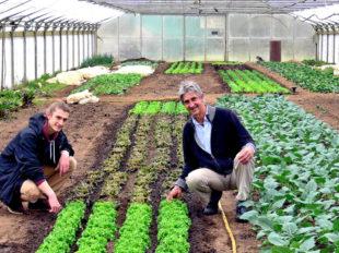 Heimisches Gemüse und Salate in Bio-Qualität liefert der Mühlhausener Biohof Groß frisch auf die Wochenmärkte. Dafür stehen Malte und Dietmar Groß (v.li.) mit ihrem guten Namen. Foto: nh