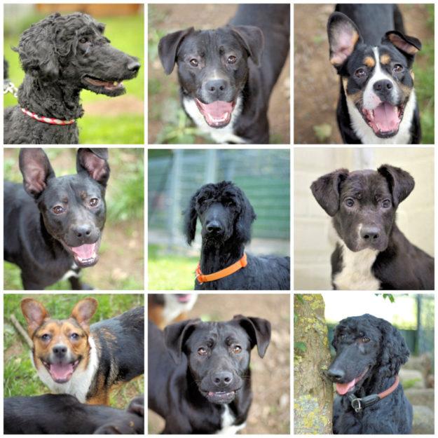 Collage mit einigen der aus Mangelernährung und Unterversorgung geretteten Hunde. Foto: nh
