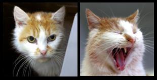 Max (li.) und Moritz mögen es gern kuschelig. Fotos: nh