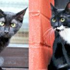 Die beiden nordhessischen Kater Fionn und Savi haben im Tierheim Freundschaft geschlossen. Nun suchen sie gemeinsam ein neues Zuhause. Foto: nh
