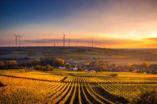 Eine nachhaltige Landwirtschaft unter ökologischen Gesichtspunkten hat den Landkreis nun zur Modellregion gemacht. Foto: David Mark   Pixabay