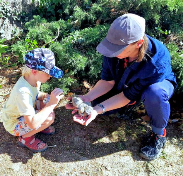 Sabine Leo und ein kleiner Helfer bei der Bergung der Jungvögel. Foto: nh
