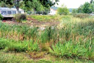 Früher ein Lebensraum für Amphibien, ist der trocken gefallene Niedensteiner Teich nicht einmal mehr ein Flachwasser. Foto: Jörg Warlich