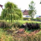 Wo einst die Frösche ihr Frühjahrskonzert zum besten gaben, herrscht heute sommerliche Dürre. Foto: Jörg Warlich