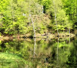 Der Grüne See trägt seinen Namen zurecht. Foto: nh