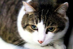Timmy ist erst seit kurzem Gast im Tierheim. Er sucht nun eine neue Bleibe in Wohnungshaltung. Foto: nh