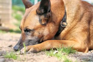 Tyson ist ein Hund, der eine konsequente Führung verlangt. Foto: nh