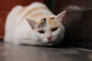 Henni ist das Tier der ersten Novemberwoche. Foto: nh