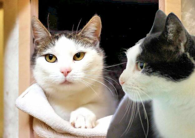 Kapuki und Aslan sind zusammen aufgewachsen und suchen nun ein gemeinsames Zuhause. Fotos: nh