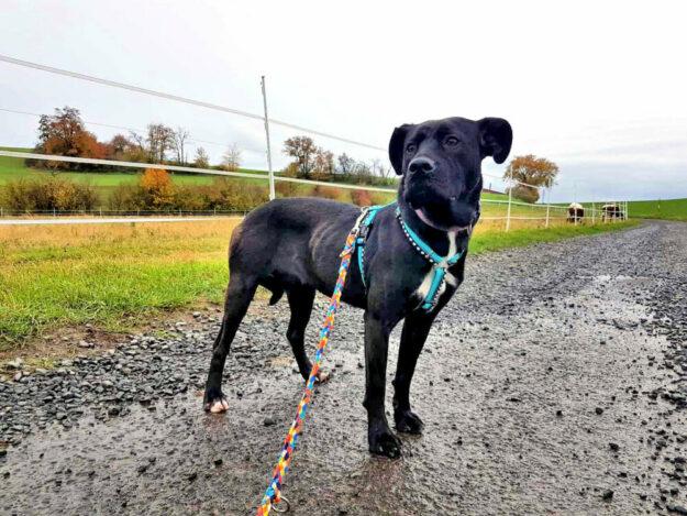 Am liebsten ginge Taja in ein neues Zuhause, in dem sie die Gesellschaft anderer Hunde findet. Foto: nh