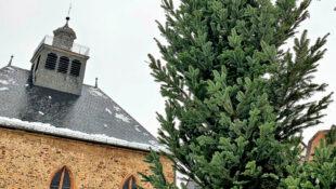 Höher als ein Fotoformat ragt der stattliche Baum in den Himmel. Foto: FREIE WÄHLER