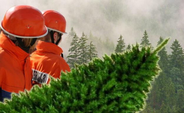 Wegen der Corona-Pandemie fährt die Feuerwehr in diesem Jahr nicht von Haus zu Haus. Christbäume können nur an Sammelstellen abgegeben werden. Foto: nh