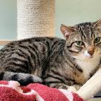 Peanut mag sich im Tierheim nicht so recht einleben. Das macht ihn aber zum perfekten Kandidaten für den Umzug in ein richtiges neues Zuhause. Foto: nh