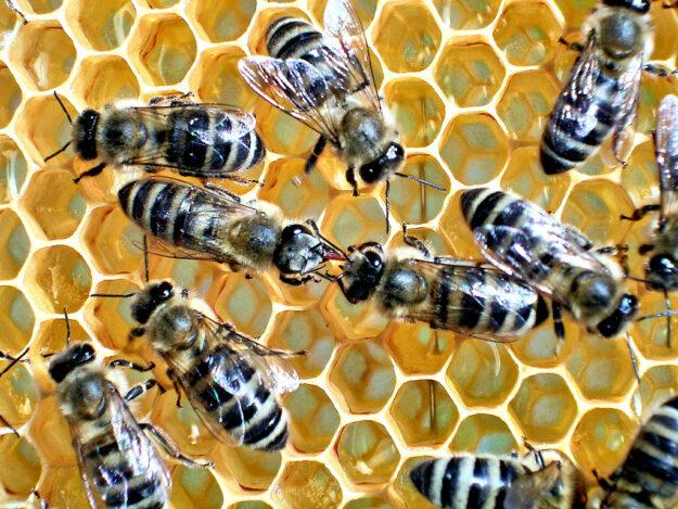 Die Honigbiene: Ohne sie läuft (fast) nichts. Foto: Markus Neumann
