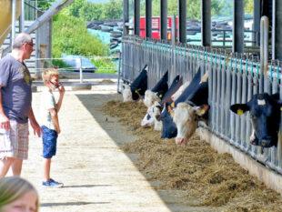 Diese Milchkühe auf Griesels Hof produzieren Biomilch. Foto: nh