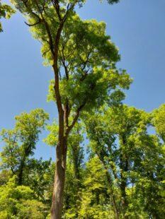 Der Homberger Wald hat der Kreisstadt heute eine Bundeswaldprämie von rund 62.000 Euro eingebracht. Foto: Uwe Dittmer
