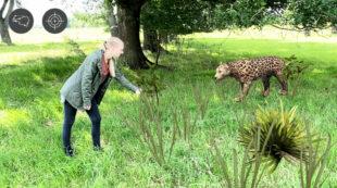 Was bei Schwalm statt Safari gefahrlos möglich ist, sollte in freier Wildbahn lieber nicht ausprobiert werden: Die Begegnung mit dem Leoparden. Screenshot: Michael Seeger   Stadt Schwalmstadt